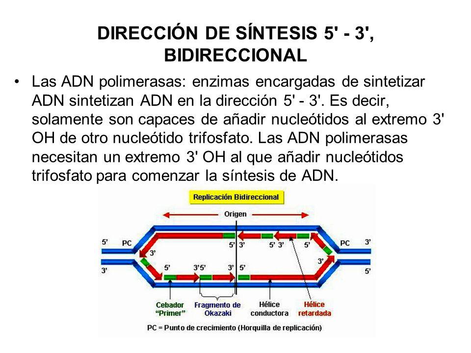 DIRECCIÓN DE SÍNTESIS 5' - 3', BIDIRECCIONAL Las ADN polimerasas: enzimas encargadas de sintetizar ADN sintetizan ADN en la dirección 5' - 3'. Es deci