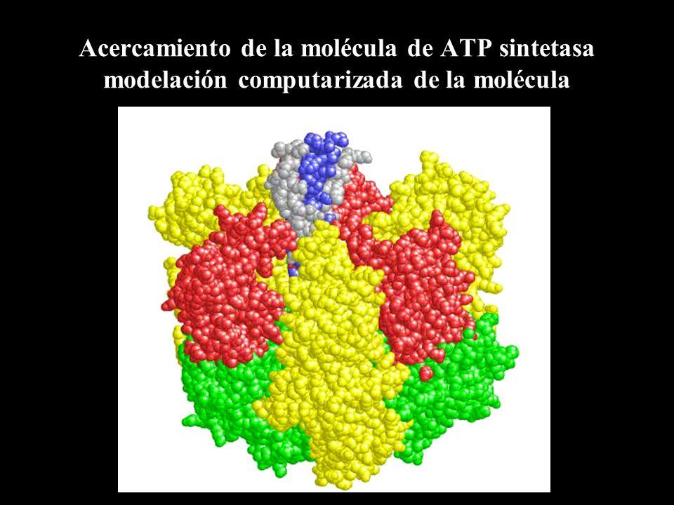 Acercamiento de la molécula de ATP sintetasa modelación computarizada de la molécula