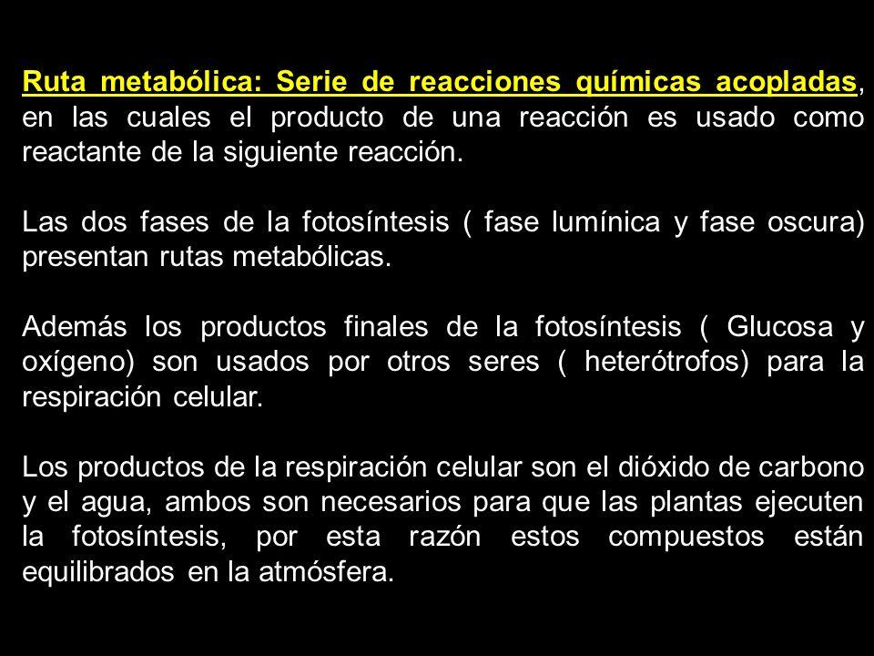 Ruta metabólica: Serie de reacciones químicas acopladas, en las cuales el producto de una reacción es usado como reactante de la siguiente reacción. L