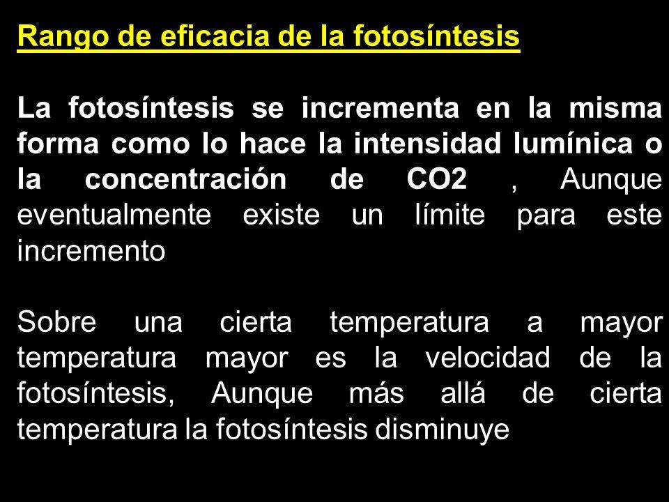 Rango de eficacia de la fotosíntesis La fotosíntesis se incrementa en la misma forma como lo hace la intensidad lumínica o la concentración de CO2, Au