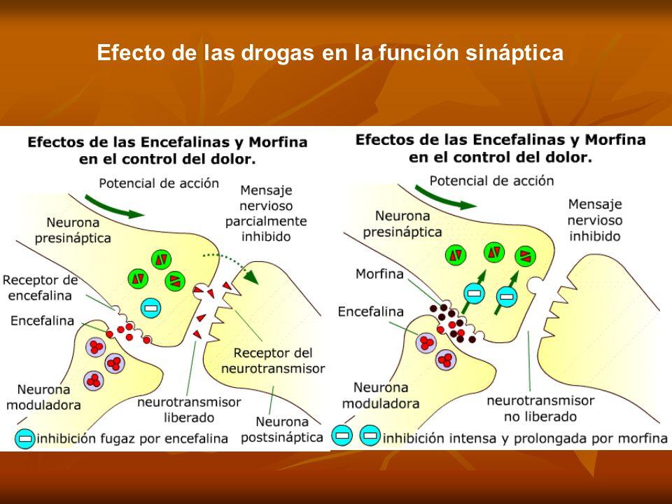 1.Aminas: Noradrenalina, Dopamina, Serotonina Influye en estado anímico. Su desequilibrio se asocia con depresión, déficit atencional y esquizofrenia