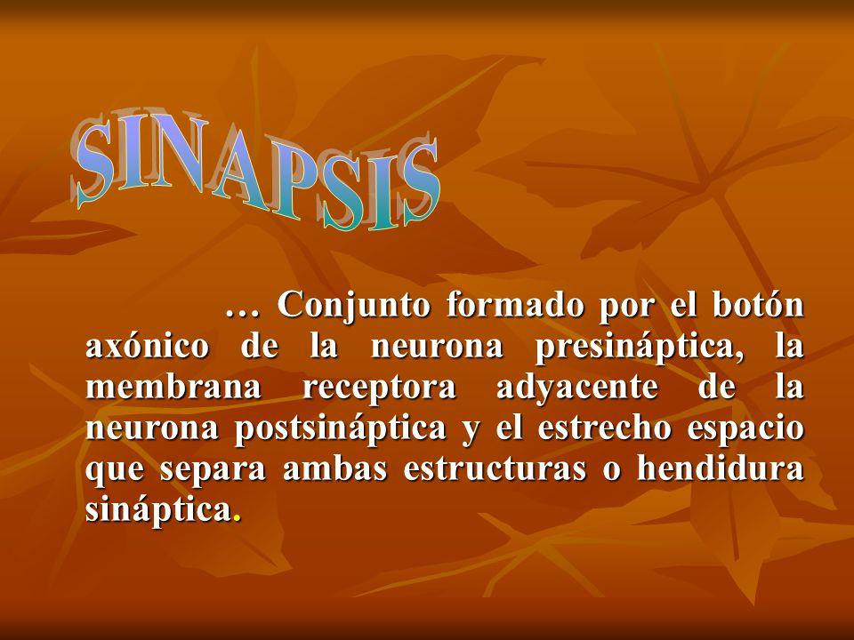 1.Aminas: Noradrenalina, Dopamina, Serotonina Influye en estado anímico.