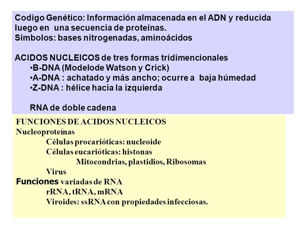 Replicación del ADN Matthew Meselson y Franklin W.