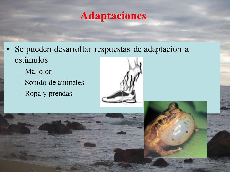 Adaptaciones Se pueden desarrollar respuestas de adaptación a estímulos –Mal olor –Sonido de animales –Ropa y prendas
