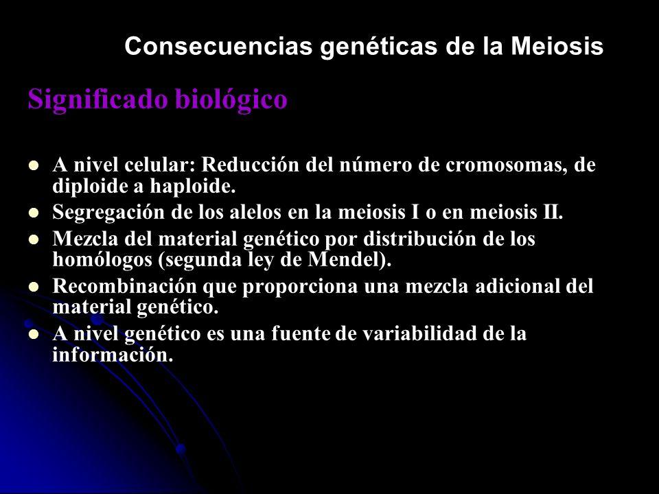 Significado biológico A nivel celular: Reducción del número de cromosomas, de diploide a haploide. Segregación de los alelos en la meiosis I o en meio