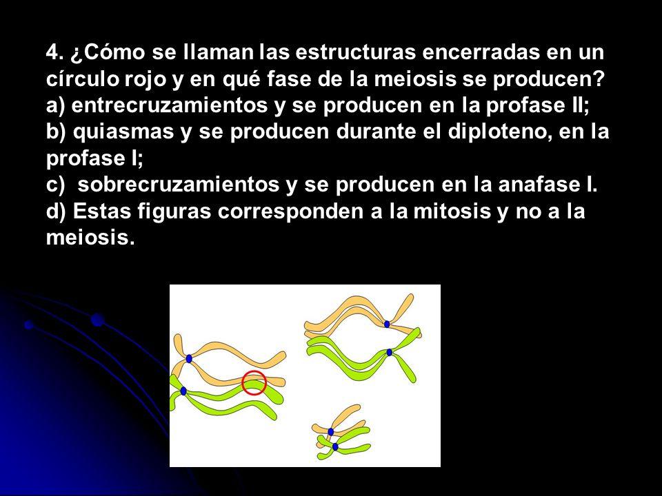 4. ¿Cómo se llaman las estructuras encerradas en un círculo rojo y en qué fase de la meiosis se producen? a) entrecruzamientos y se producen en la pro