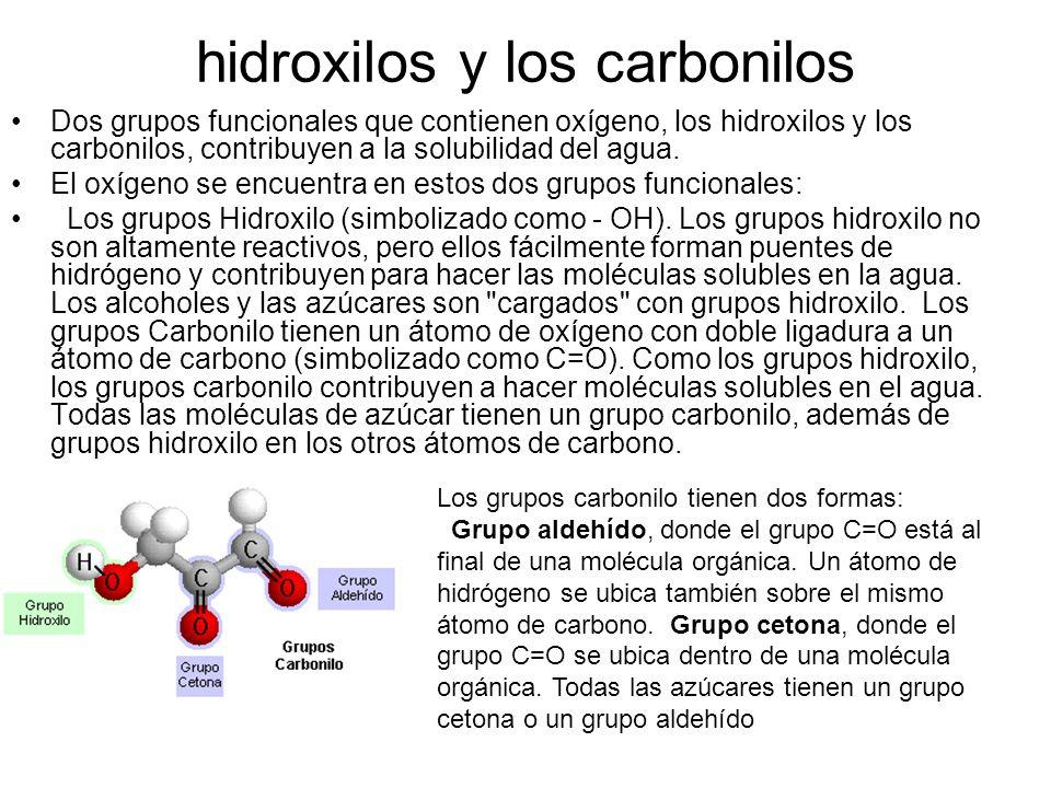 hidroxilos y los carbonilos Dos grupos funcionales que contienen oxígeno, los hidroxilos y los carbonilos, contribuyen a la solubilidad del agua. El o