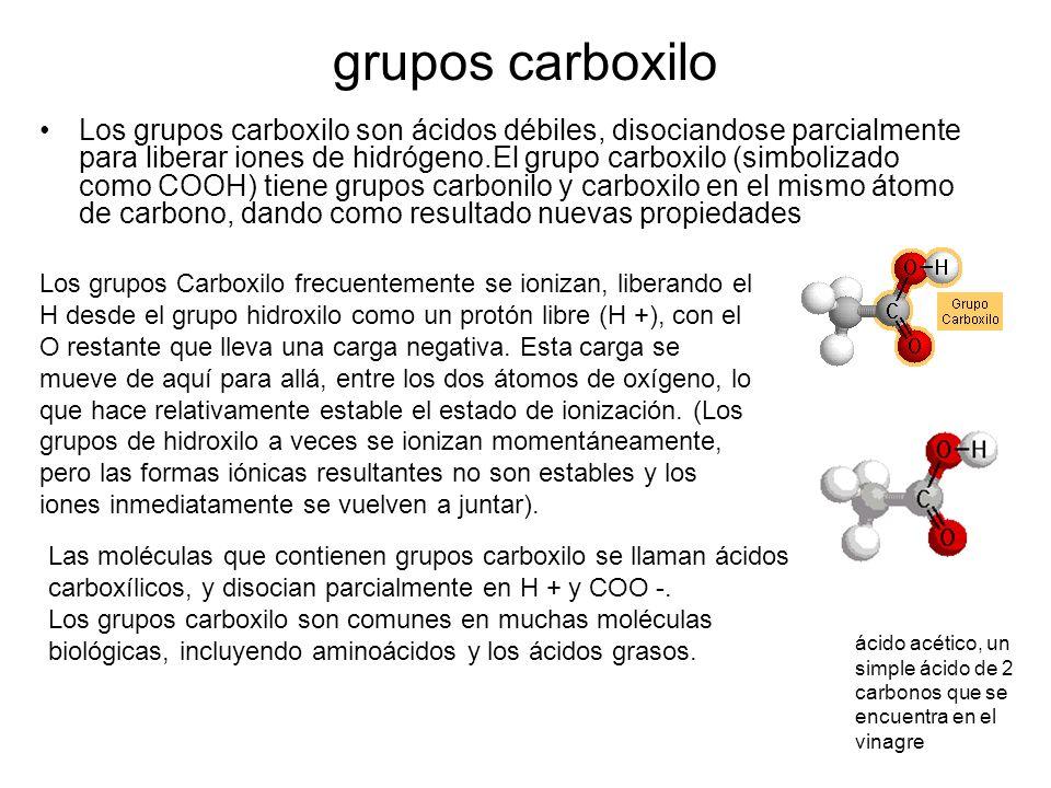grupos carboxilo Los grupos carboxilo son ácidos débiles, disociandose parcialmente para liberar iones de hidrógeno.El grupo carboxilo (simbolizado co