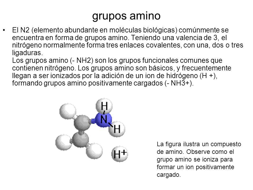 grupos amino El N2 (elemento abundante en moléculas biológicas) comúnmente se encuentra en forma de grupos amino. Teniendo una valencia de 3, el nitró