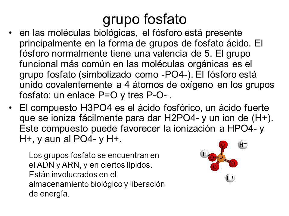 grupo fosfato en las moléculas biológicas, el fósforo está presente principalmente en la forma de grupos de fosfato ácido. El fósforo normalmente tien