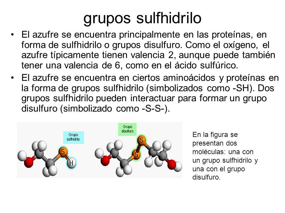 grupos sulfhidrilo El azufre se encuentra principalmente en las proteínas, en forma de sulfhidrilo o grupos disulfuro. Como el oxígeno, el azufre típi