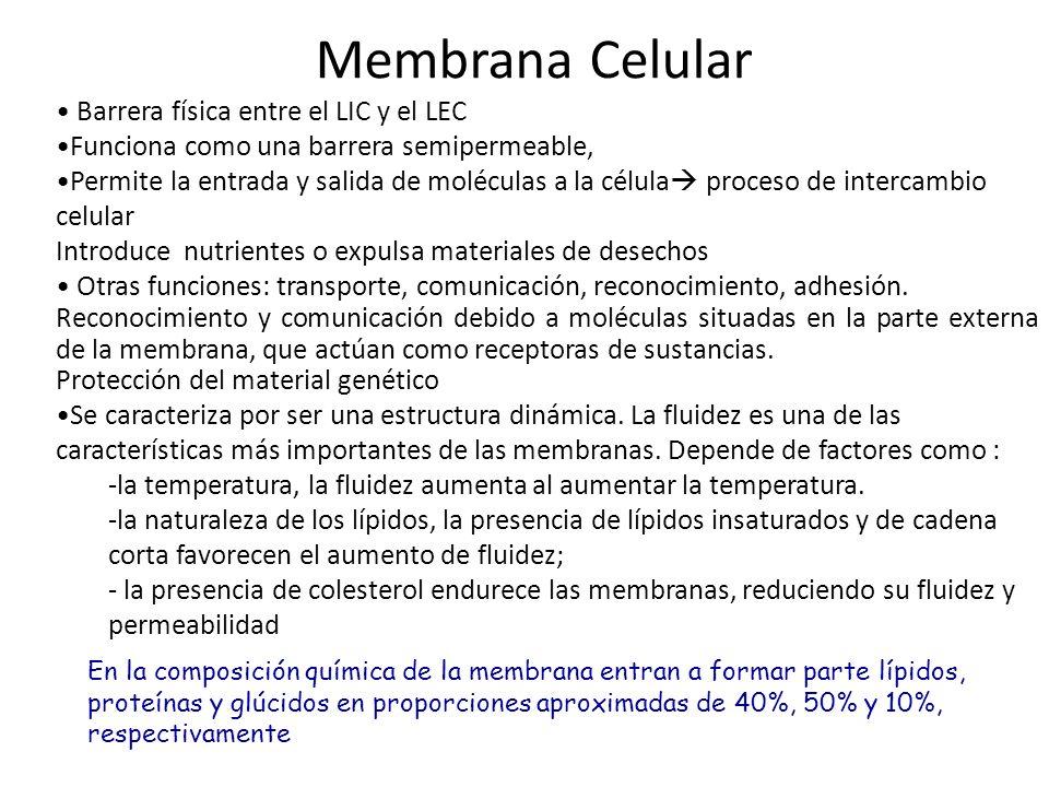 D Describir componentes de las membranas biológicas.