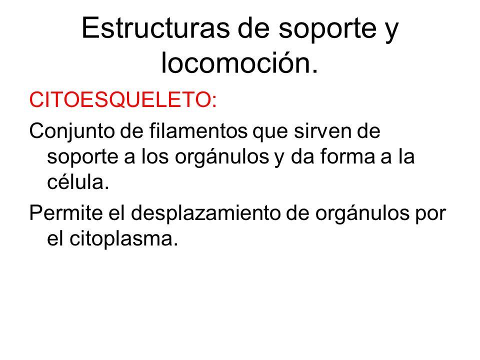 CLOROPLASTO Orgánulos exclusivos de células vegetales. Tiene forma redondeada y su tamaño varia de unas células a otras. Poseen una membrana externa y