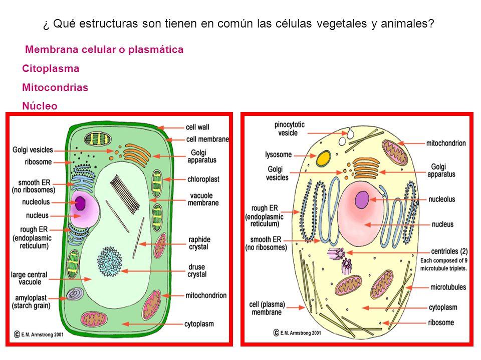 ¿Cuánto has Aprendido? *¿Cómo defines célula? *¿Qué significa que la célula sea la unidad estructural de la materia viva? *¿Qué significa que la célul
