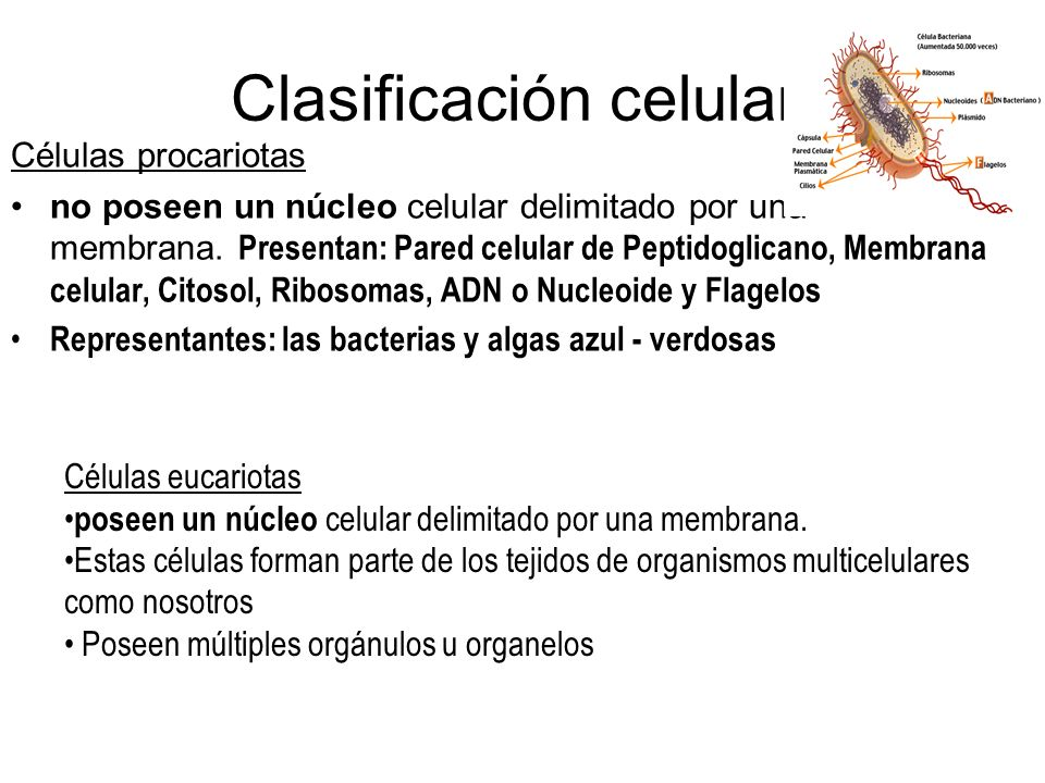 Según el número de células, un organismo se clasifican en: Seres Unicelulares: Constituidos por una sola célula, en general se les llama microorganism