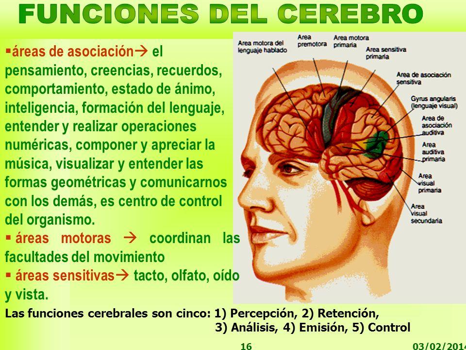 03/02/201416 áreas de asociación el pensamiento, creencias, recuerdos, comportamiento, estado de ánimo, inteligencia, formación del lenguaje, entender