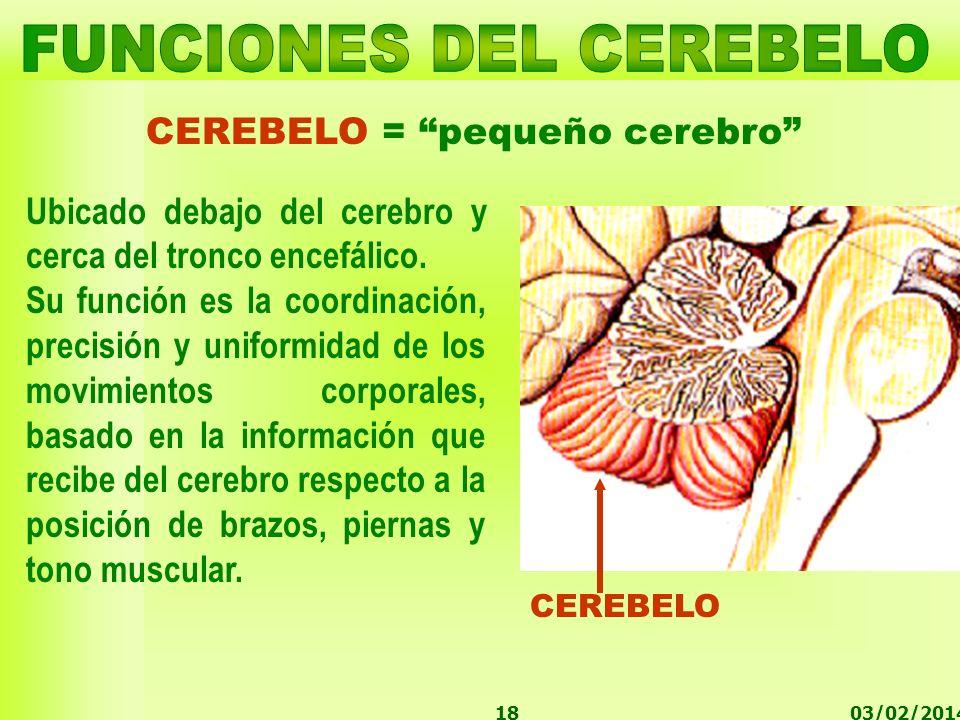 03/02/201418 CEREBELO = pequeño cerebro CEREBELO Ubicado debajo del cerebro y cerca del tronco encefálico. Su función es la coordinación, precisión y