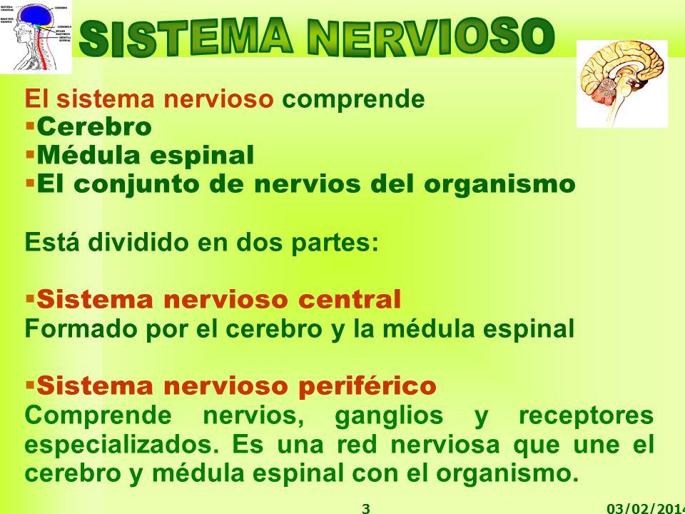 03/02/20143 El sistema nervioso comprende Cerebro Médula espinal El conjunto de nervios del organismo Está dividido en dos partes: Sistema nervioso ce