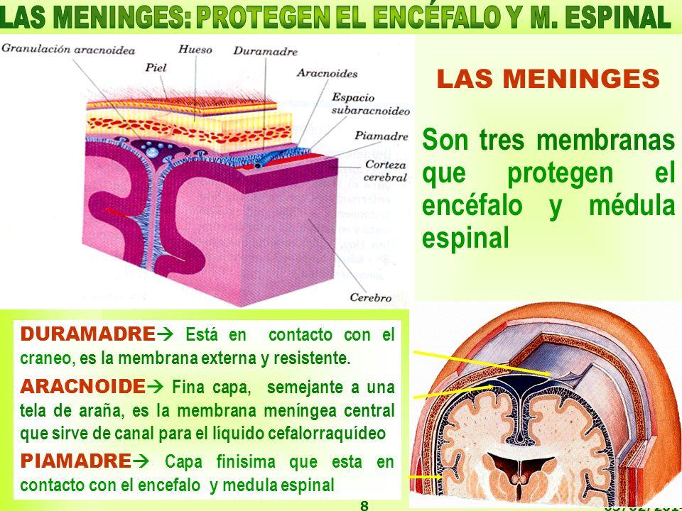 03/02/20148 LAS MENINGES Son tres membranas que protegen el encéfalo y médula espinal DURAMADRE Está en contacto con el craneo, es la membrana externa