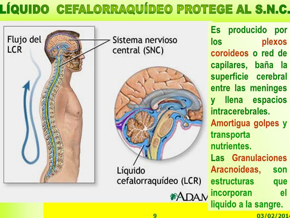 03/02/20149 Es producido por los plexos coroideos o red de capilares, baña la superficie cerebral entre las meninges y llena espacios intracerebrales.