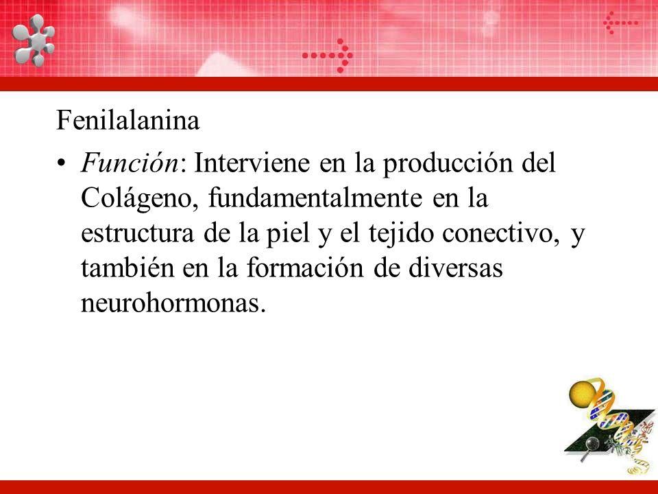 Fenilalanina Función: Interviene en la producción del Colágeno, fundamentalmente en la estructura de la piel y el tejido conectivo, y también en la formación de diversas neurohormonas.