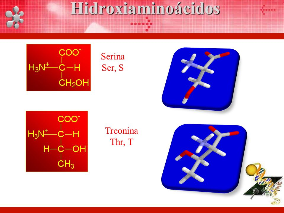 Serina Ser, S Treonina Thr, THidroxiaminoácidos