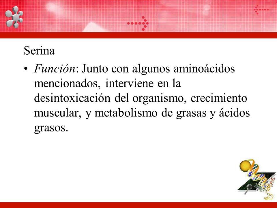 Serina Función: Junto con algunos aminoácidos mencionados, interviene en la desintoxicación del organismo, crecimiento muscular, y metabolismo de grasas y ácidos grasos.