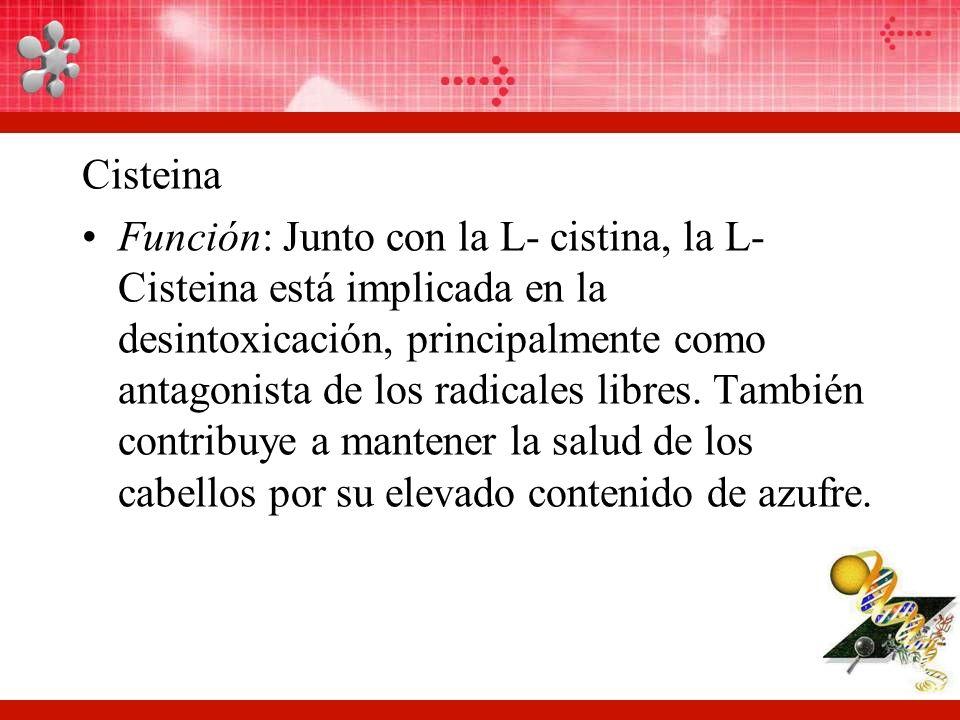 Cisteina Función: Junto con la L- cistina, la L- Cisteina está implicada en la desintoxicación, principalmente como antagonista de los radicales libres.