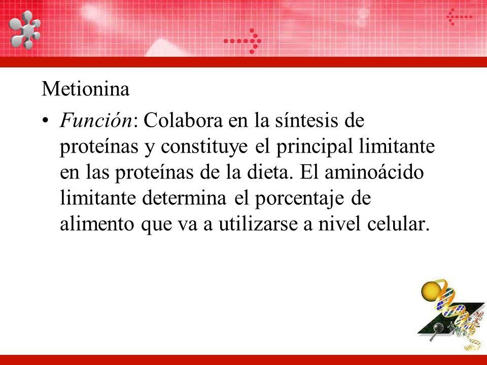 Metionina Función: Colabora en la síntesis de proteínas y constituye el principal limitante en las proteínas de la dieta.