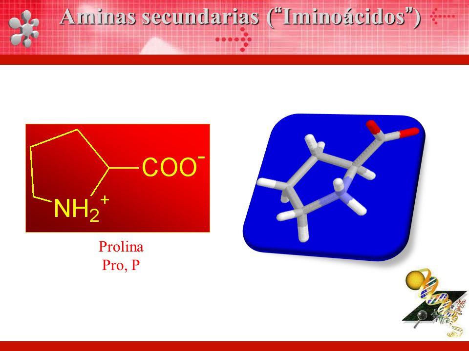 Prolina Pro, P Aminas secundarias (Iminoácidos)