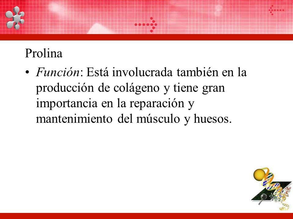 Prolina Función: Está involucrada también en la producción de colágeno y tiene gran importancia en la reparación y mantenimiento del músculo y huesos.