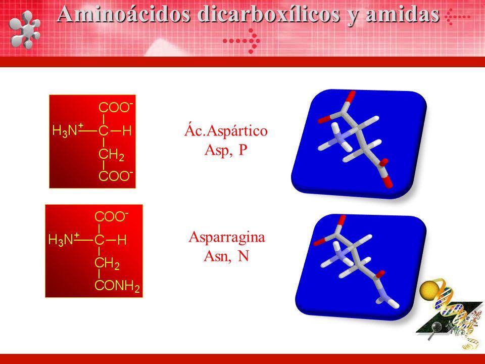 Ác.Aspártico Asp, P Asparragina Asn, N Aminoácidos dicarboxílicos y amidas