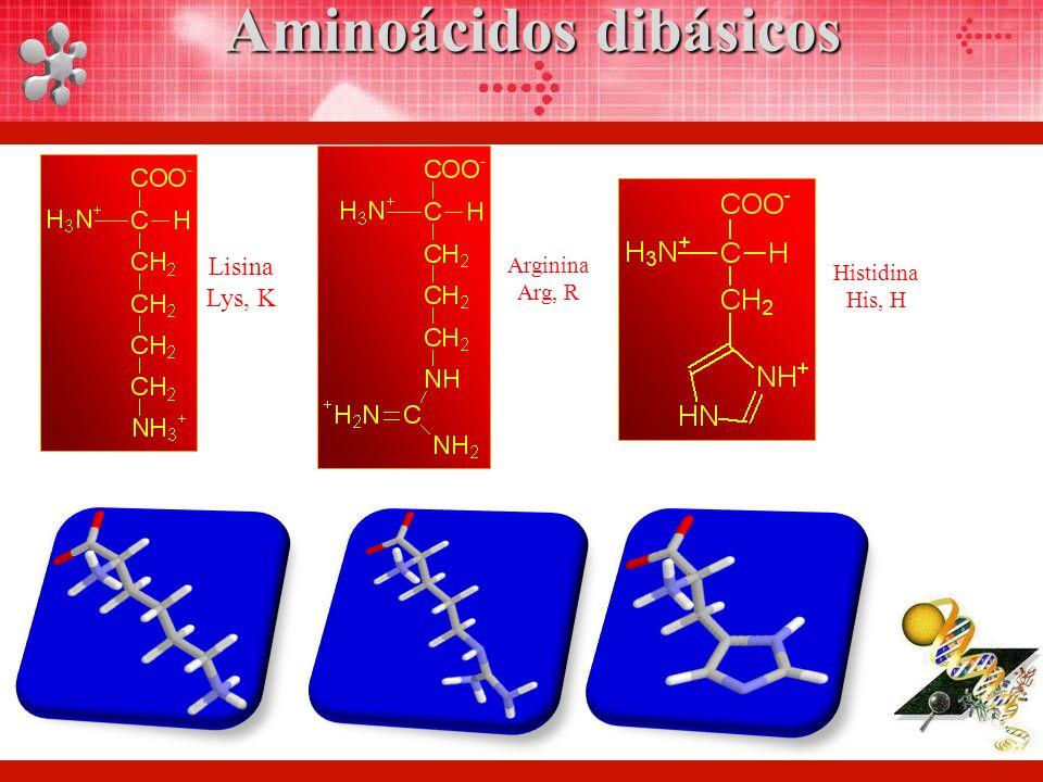 Lisina Lys, K Arginina Arg, R Histidina His, H Aminoácidos dibásicos