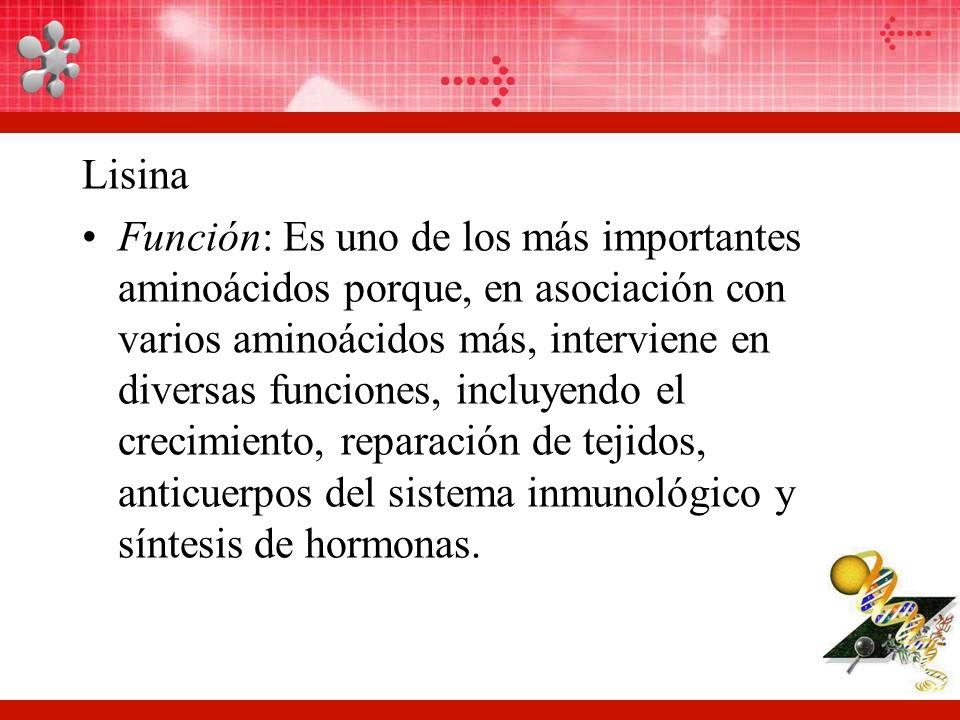 Lisina Función: Es uno de los más importantes aminoácidos porque, en asociación con varios aminoácidos más, interviene en diversas funciones, incluyendo el crecimiento, reparación de tejidos, anticuerpos del sistema inmunológico y síntesis de hormonas.