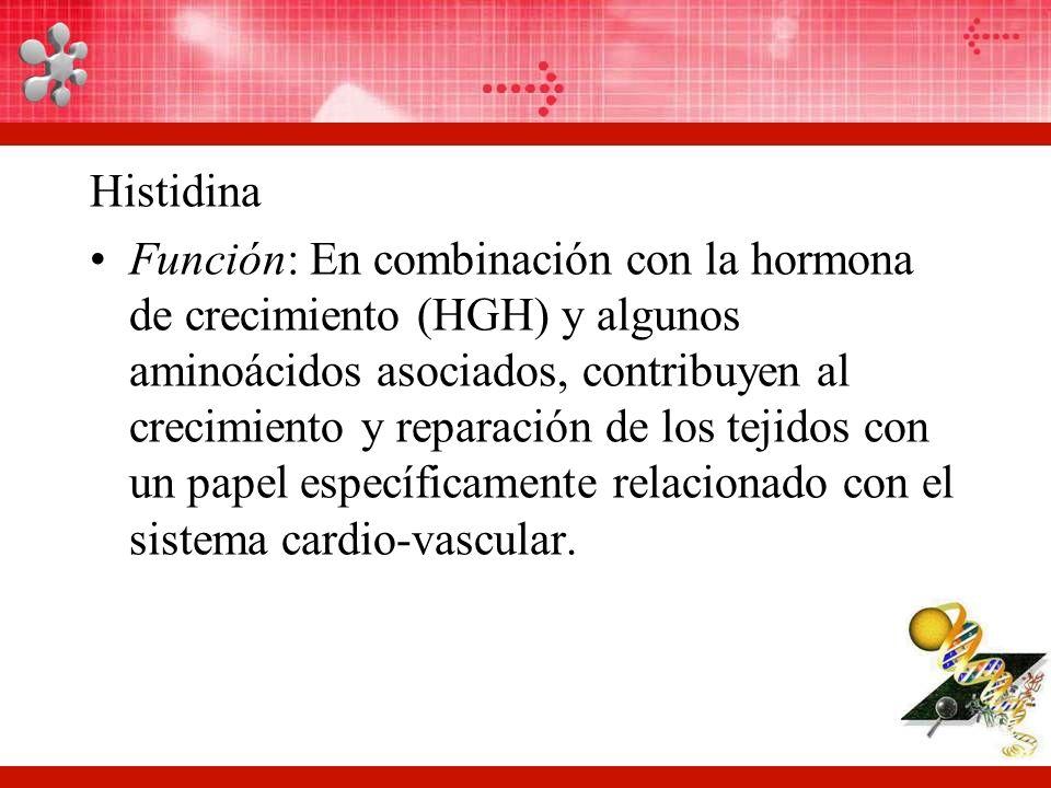 Histidina Función: En combinación con la hormona de crecimiento (HGH) y algunos aminoácidos asociados, contribuyen al crecimiento y reparación de los tejidos con un papel específicamente relacionado con el sistema cardio-vascular.