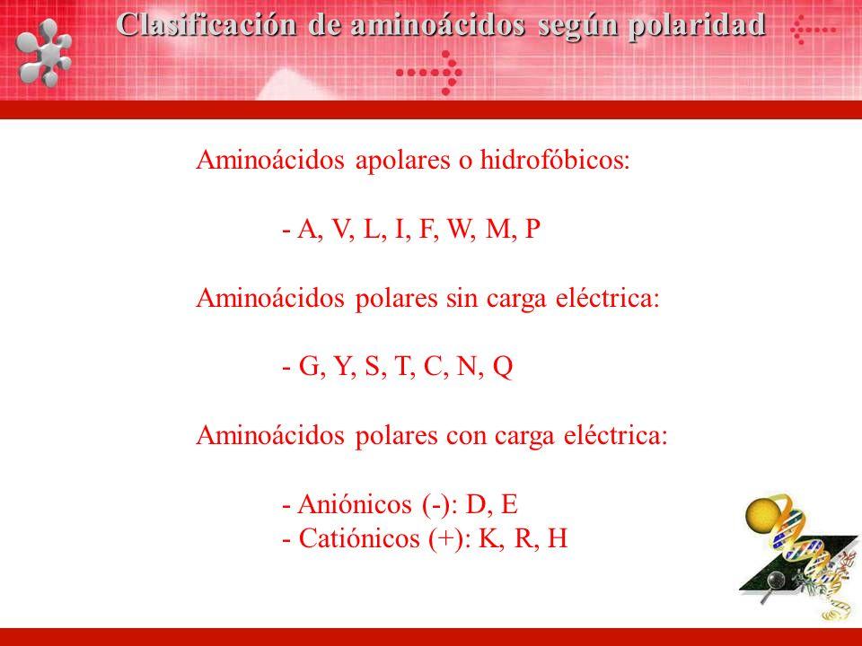 Aminoácidos apolares o hidrofóbicos: - A, V, L, I, F, W, M, P Aminoácidos polares sin carga eléctrica: - G, Y, S, T, C, N, Q Aminoácidos polares con carga eléctrica: - Aniónicos (-): D, E - Catiónicos (+): K, R, H Clasificación de aminoácidos según polaridad
