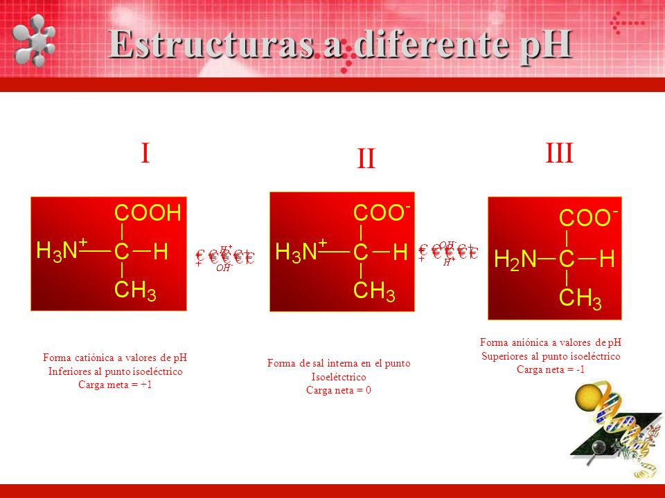 IIII II Estructuras a diferente pH Forma catiónica a valores de pH Inferiores al punto isoeléctrico Carga meta = +1 Forma de sal interna en el punto Isoelétctrico Carga neta = 0 Forma aniónica a valores de pH Superiores al punto isoeléctrico Carga neta = -1
