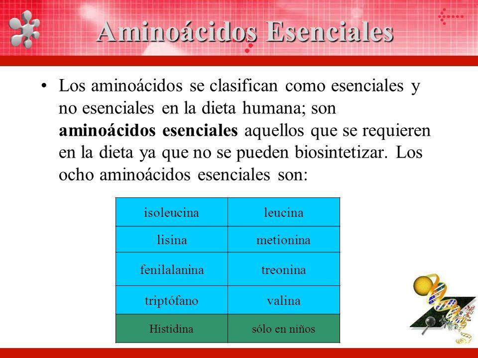 Aminoácidos Esenciales Los aminoácidos se clasifican como esenciales y no esenciales en la dieta humana; son aminoácidos esenciales aquellos que se requieren en la dieta ya que no se pueden biosintetizar.
