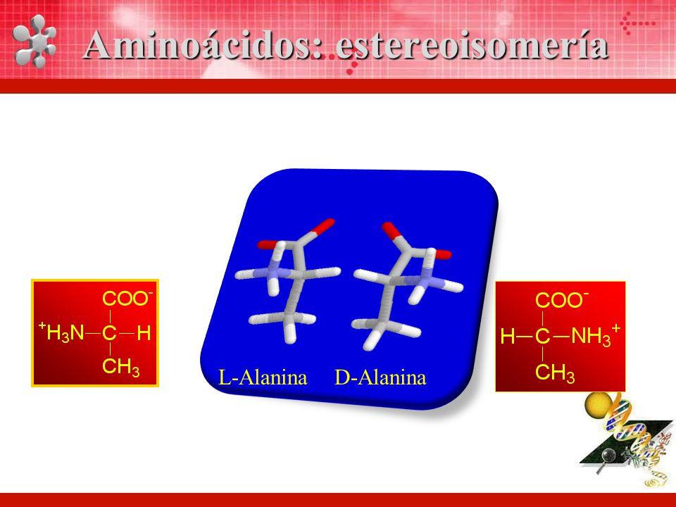 L-AlaninaD-Alanina Aminoácidos: estereoisomería