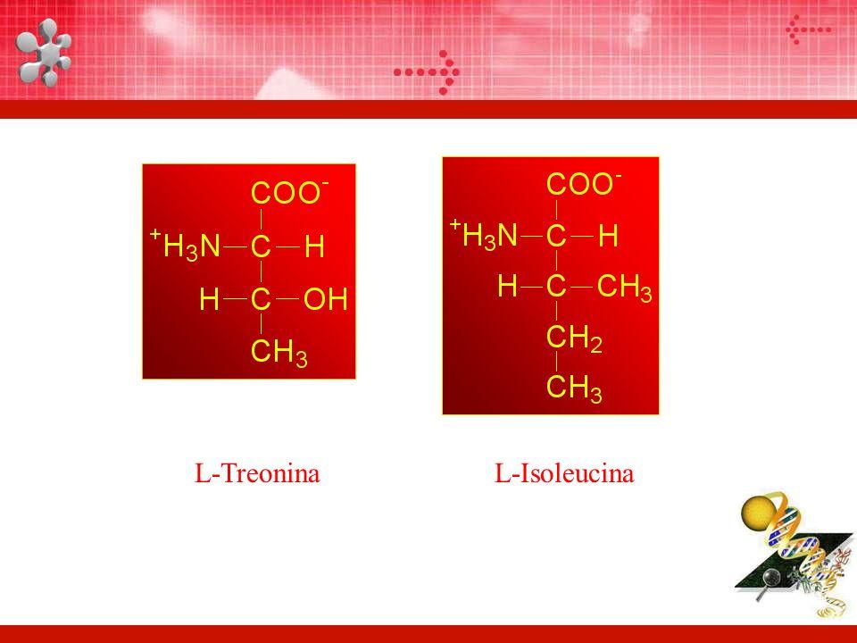 L-TreoninaL-Isoleucina