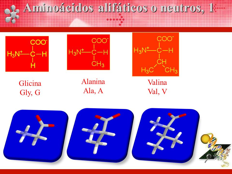 Glicina Gly, G Alanina Ala, A Valina Val, V Aminoácidos alifáticos o neutros, 1
