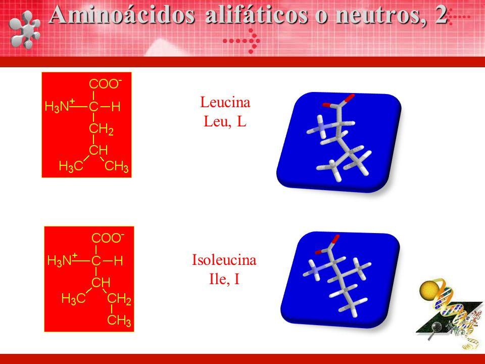 Leucina Leu, L Isoleucina Ile, I Aminoácidos alifáticos o neutros, 2