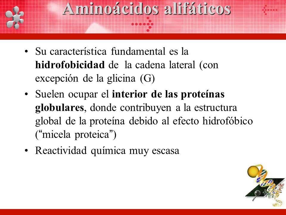 Aminoácidos alifáticos Su característica fundamental es la hidrofobicidad de la cadena lateral (con excepción de la glicina (G) Suelen ocupar el interior de las proteínas globulares, donde contribuyen a la estructura global de la proteína debido al efecto hidrofóbico (micela proteica) Reactividad química muy escasa