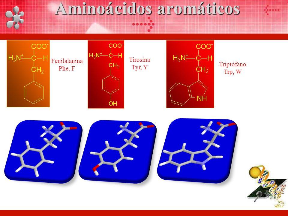 Fenilalanina Phe, F Tirosina Tyr, Y Triptófano Trp, W Aminoácidos aromáticos