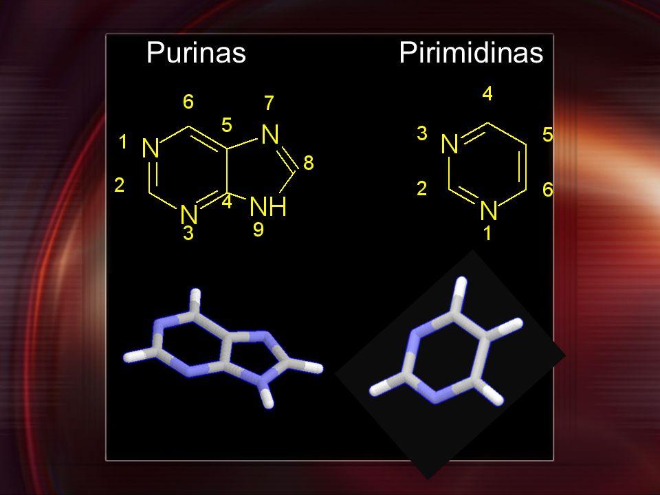 PurinasPirimidinas
