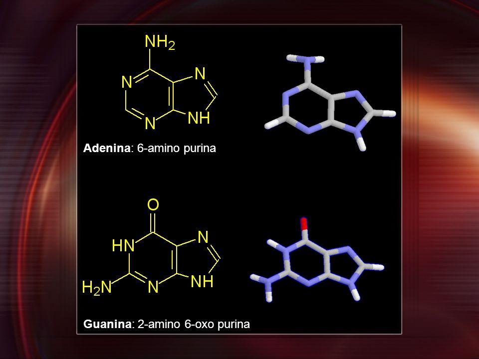Adenina: 6-amino purina Guanina: 2-amino 6-oxo purina