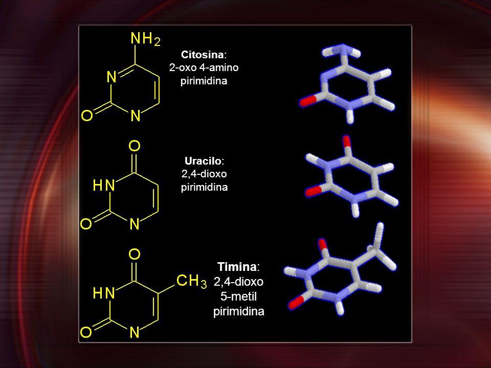 Citosina: 2-oxo 4-amino pirimidina Uracilo: 2,4-dioxo pirimidina Timina: 2,4-dioxo 5-metil pirimidina