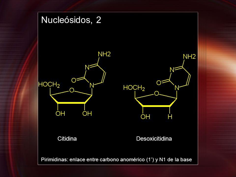 CitidinaDesoxicitidina Nucleósidos, 2 Pirimidinas: enlace entre carbono anomérico (1) y N1 de la base