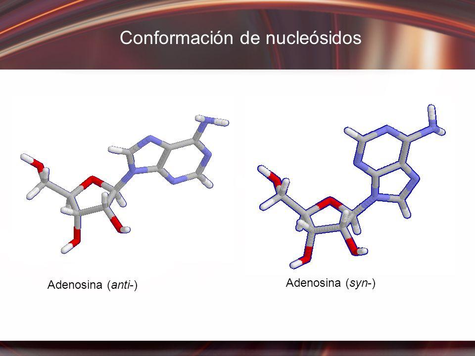 Adenosina (anti-) Adenosina (syn-) Conformación de nucleósidos