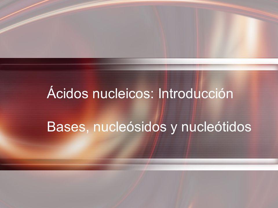 Ácidos nucleicos: Introducción Bases, nucleósidos y nucleótidos